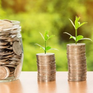 Geld wächst auf den Bäumen