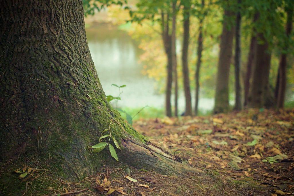 Wald und Klimaschutz